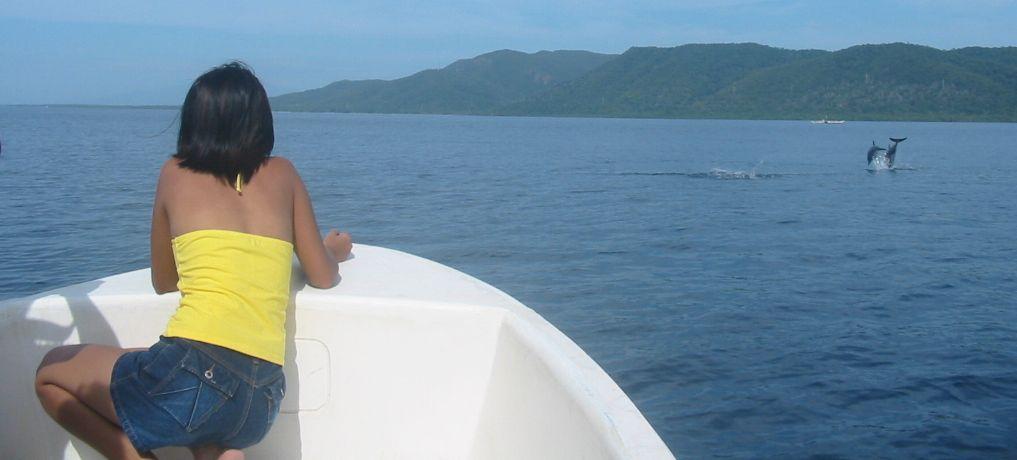 dolphins-puerto-princessa